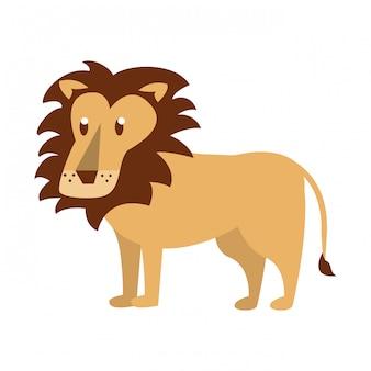 Lion wild animal