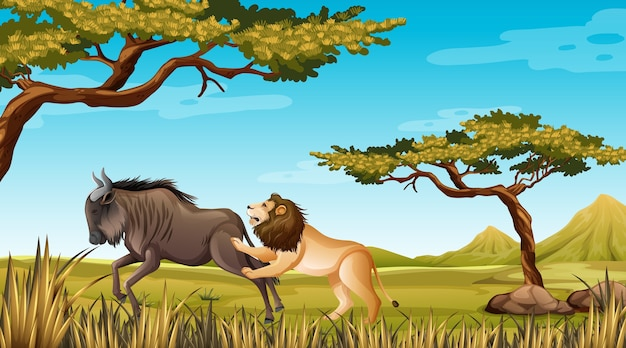 Lion and wildebeest in nature backgroud