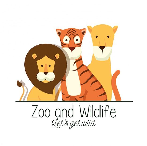 사파리 보호 구역에서 호랑이와 사자