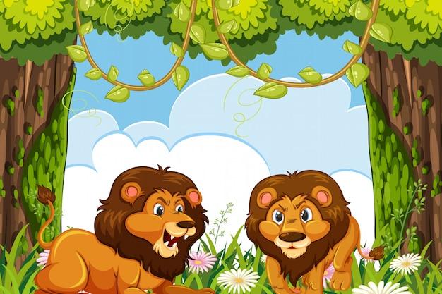 ジャングルのライオン