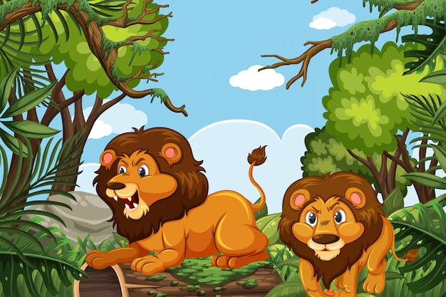 Lions in jungle scene