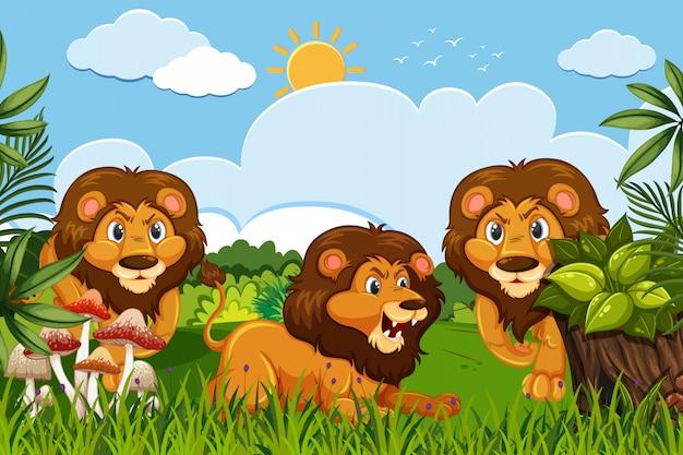 Lions in jungle scene