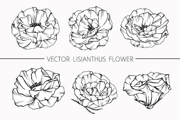 Lisianthus 꽃