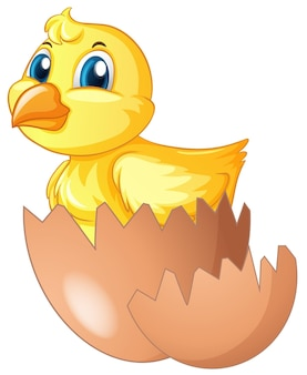 Little chick comes of of egg