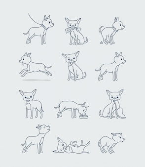 Little chihuahua dog in different poses