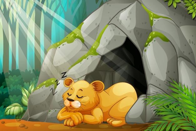 洞穴で眠っている小さな子猫
