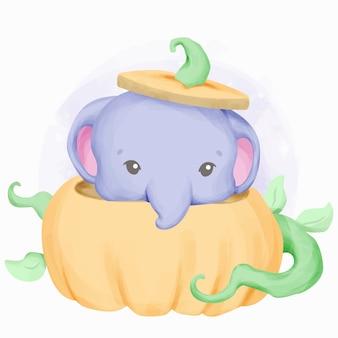Little cute elephant and the pumpkin