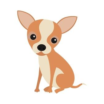 Маленький милый сидящий щенок чихуахуа.