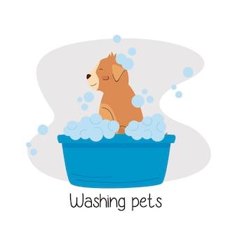 Маленькая собака купается в синей ванне