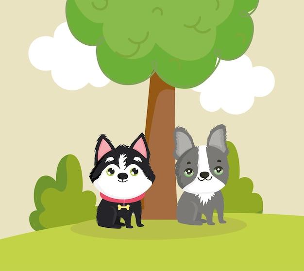 Little dogs in grass