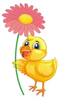 Little duckling holding flower on white background