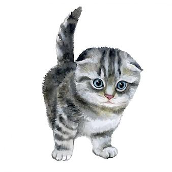 Little fluffy grey kitten in watercolor