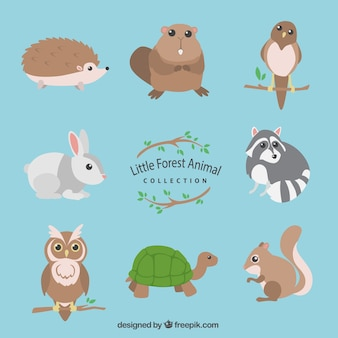 Little forest animal collection