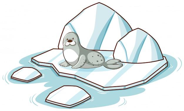 흰색 배경에 빙산에 작은 물개