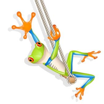 Little tree frog on a swing