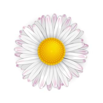 Little vector daisy