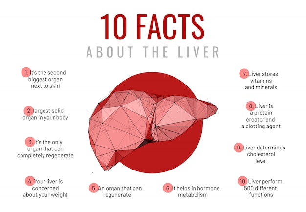 Liver facts low poly wireframe