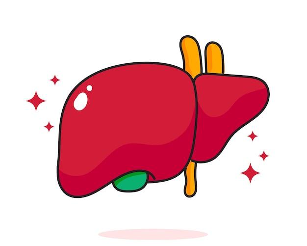 肝臓の人体解剖学生物学臓器体システムヘルスケアと医療手描き漫画アートイラスト