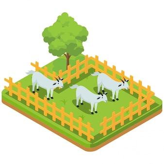パドックでヤギを含む家畜