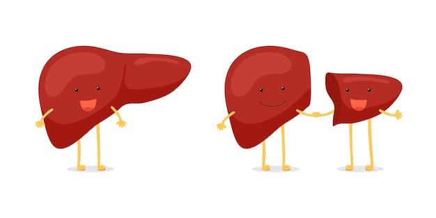 Living donor right lobe liver transplantation. cute cartoon anatomy character set. human exocrine gland organ transplant operation concept. vector flat illustration