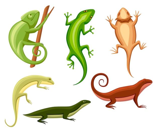 도마뱀 컬렉션. 만화 카멜레온 분기에 올라. 작은 도마뱀. 동물 아이콘 모음. 흰색 배경에 그림