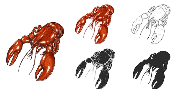 Lobster  by hand drawing.