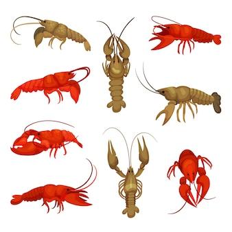 Коллекция омаров на белом фоне. концепция ракообразных.