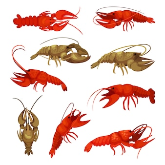 Lobster collection on white background. crustacean concept.