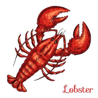 Lobster hand drawn illustration