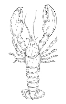 Lobster vintage hatching vector monochrome black engraving isolated on white