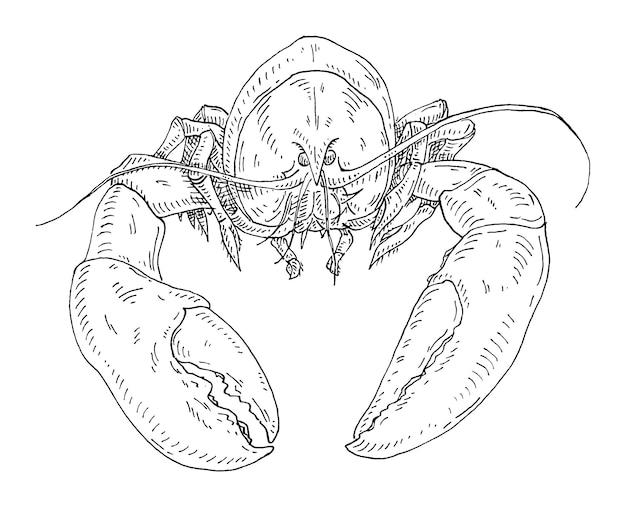 Омар винтаж штриховки вектор монохромный черный иллюстрации изолированного на белом фоне