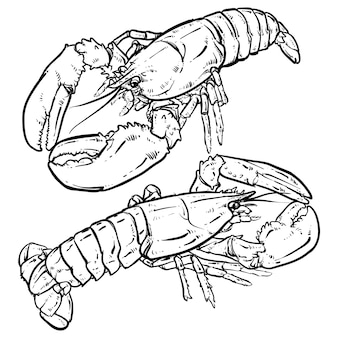 Lobster with claws on a white background