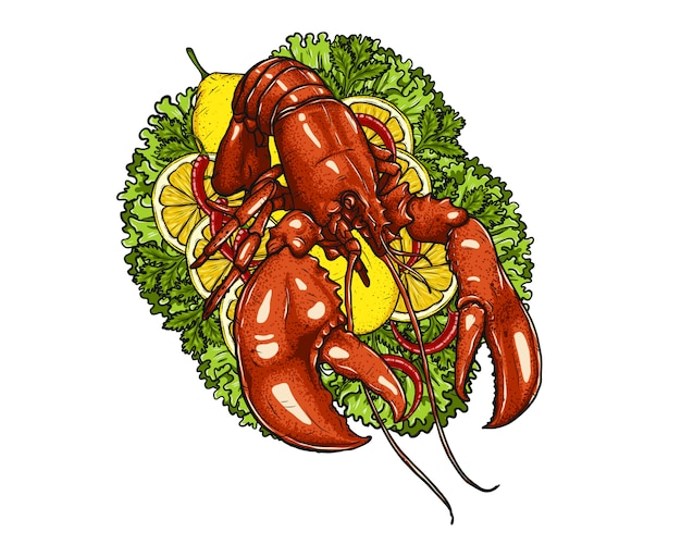 Lobster with vegetable on white