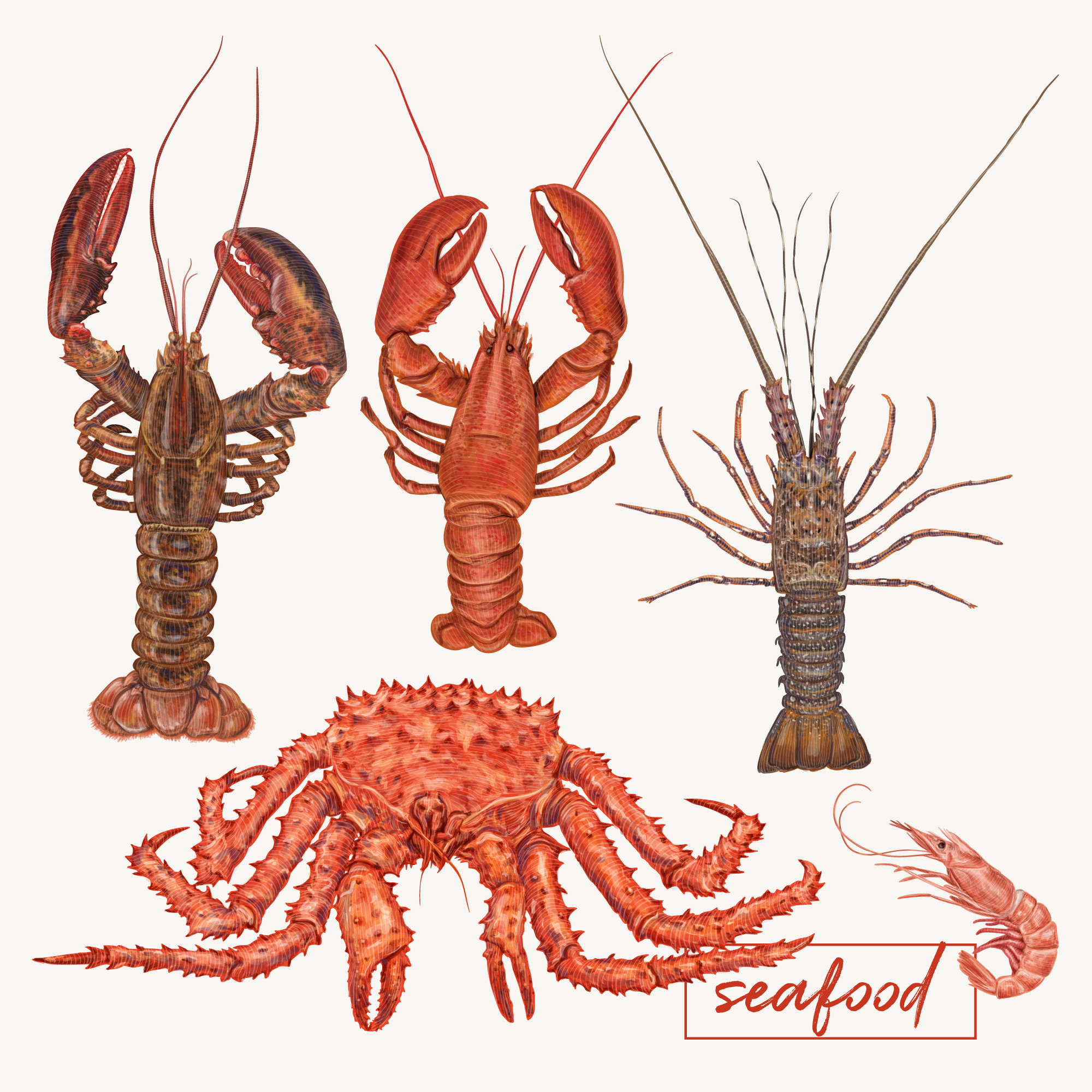 Lobsters and crabs illustration