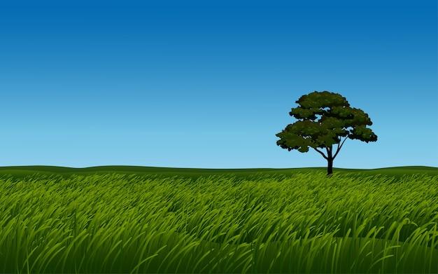 澄んだ空と草原の孤独な木