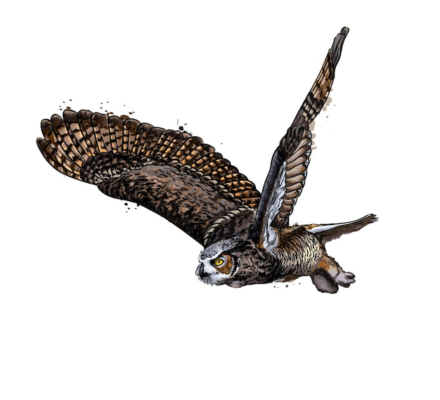 Long-eared owl, eagle owl from a splash of watercolor, colored drawing, realistic.