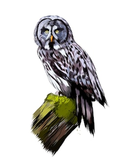 Long-eared owl, eagle owl from a splash of watercolor