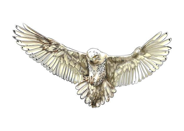 Long-eared owl, eagle owl, polar owl in flight from a splash of watercolor