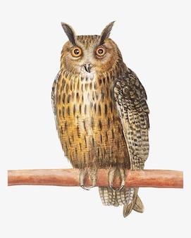 ビンテージスタイルの長い耳フクロウ