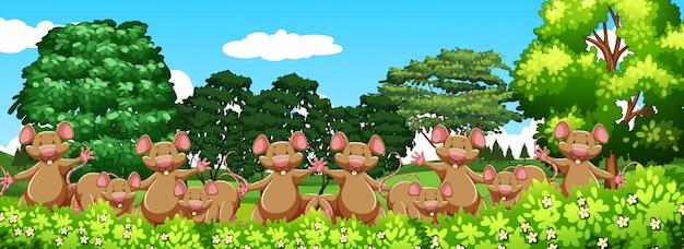 Много мыши в саду