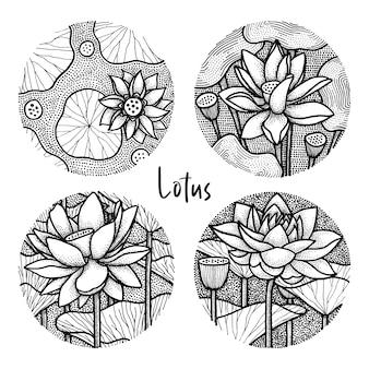 Lotus flower illustrations set, traditional illustration