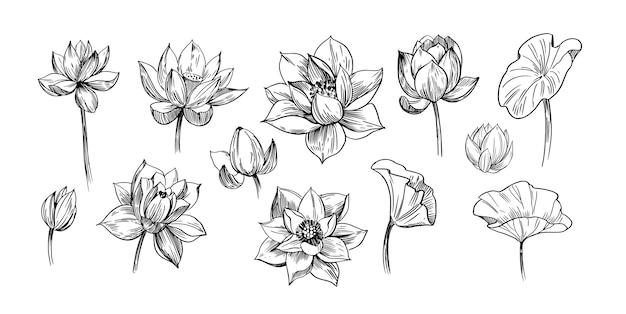 Цветок лотоса. набор рисованной иллюстрации.