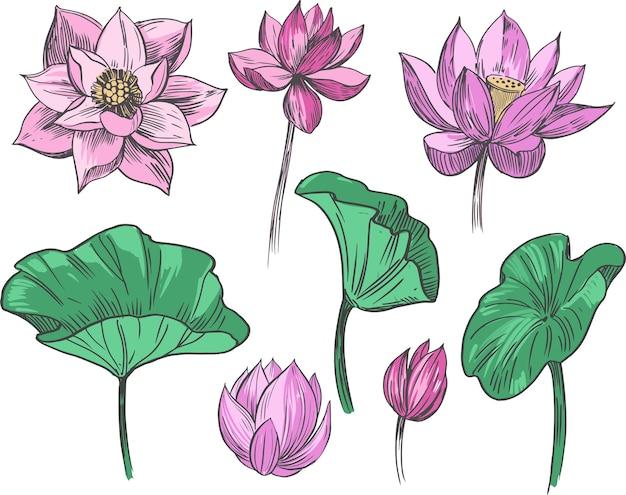 연꽃. 손으로 그린 그림의 집합입니다.