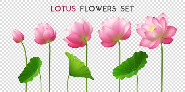Lotus flowers realistic set