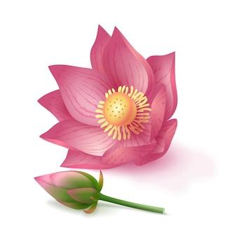 로터스 핑크 꽃과 분홍색 배경에 꽃 봉 오리입니다. 화장품, 아로마테라피, 요가를 위한 디자인. 벡터 재고 일러스트 레이 션