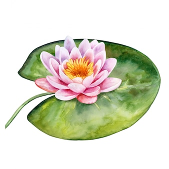 Lotus. water lily. watercolor