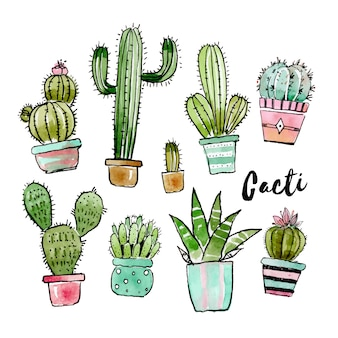 Lovely cacti collection in watercolor