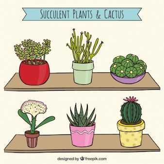 Lovely cactus collection