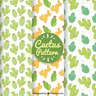 Lovely cactus patterns with hand draw style