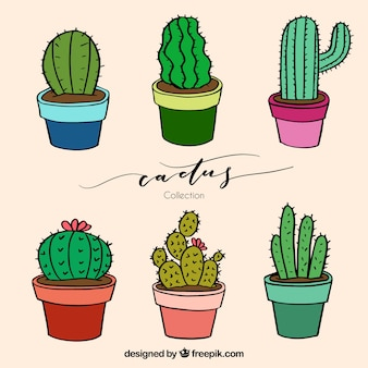 Lovely cactus with hand drawn style